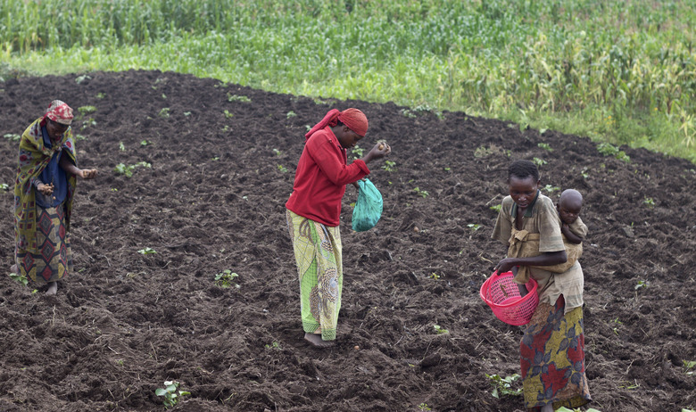 In this photo taken Monday, Dec. 14, 2015, farmers sow a potato field in Abugarama, a mountain village near the capital Bujumbura, in Burundi. Business in Bujumbura is suffering greatly after a political crisis stemming from the president's controversial bid for a third term turned violent, forcing hundreds of thousands to flee, and among the most battered are local farmers. (AP Photo/Melanie Gouby)