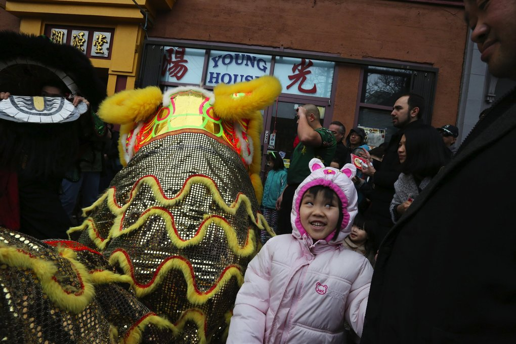 From one cat to another, a young kitten gets a kick out of the lion outside Young House gift shop in Chinatown International District Saturday during the Year of the Monkey celebration.  (Alan Berner / The Seattle Times)