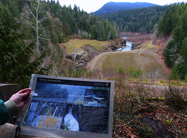 A laminated informational brochure at an overlook shows the Elwha Dam before its removal from this site in 2012. A short hike leads to the viewpoint, west of Port Angeles. (Brian J. Cantwell / The Seattle Times)