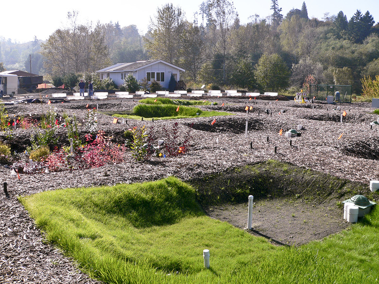 Researchers use test plots to determine the most efficient ways to plant a rain garden. (Provided by Washington State University)