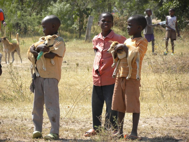 Children in Tanzania carry puppies in their arms to be vaccinated for rabies by Washington State University veterinarians.  (Serengeti Health Institute)