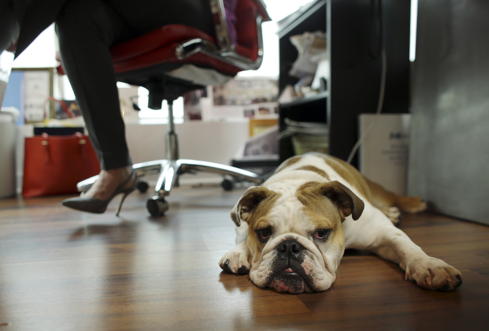 Pets At Work May Help Atmosphere But Bring Their Own