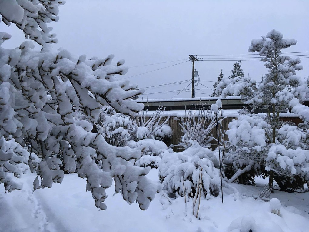Lots of accumulation at the top of Gregory Heights in Burien. (Marion Roy)