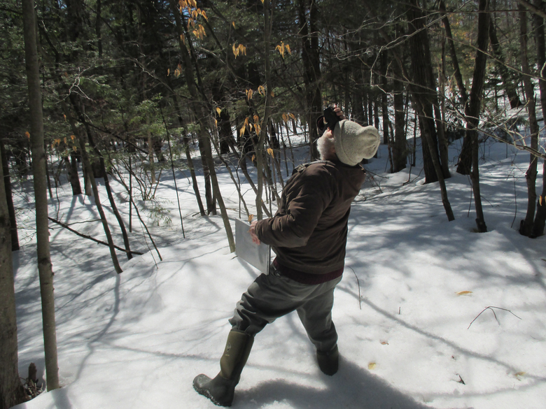 John O'Keefe uses binoculars to look for signs of spring in the tree canopy on his first spring phenology walk of 2015. I measured snow more than a foot deep in some spots. (Lynda V. Mapes/The Seattle Times)