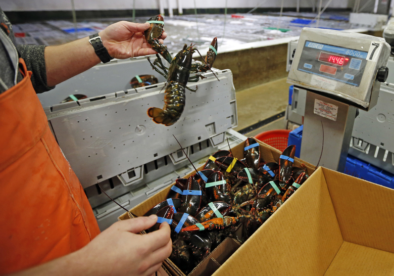 FILE – In this Thursday, Dec. 10, 2015, file photo, live lobsters are packed and weighed for overseas shipment at the Maine Lobster Outlet in York, Maine. The expanding market for lobsters in China is continuing to grow, with the country setting a new record for the value of its imports of the crustaceans from the United States. (AP Photo/Robert F. Bukaty, File)