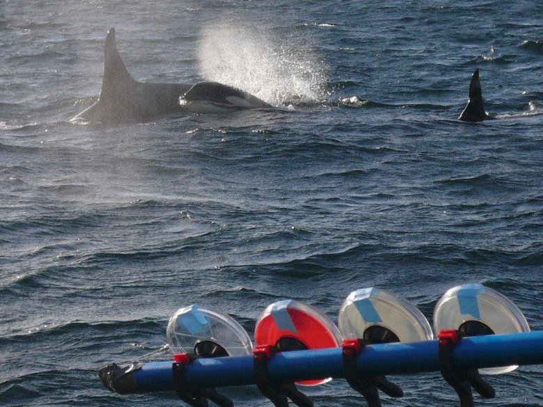 The petri plate array gathers microbial specimens from exhaling orcas in the background. (Courtesy Pete Schroeder)