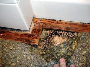 Mold In Shower Pan water damage, mold from tile showers can be fixed and prevented