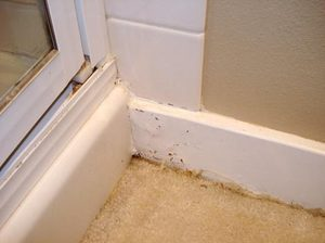 Water damage mold from tile showers can be fixed and prevented the seattle times for Water damage baseboard bathroom