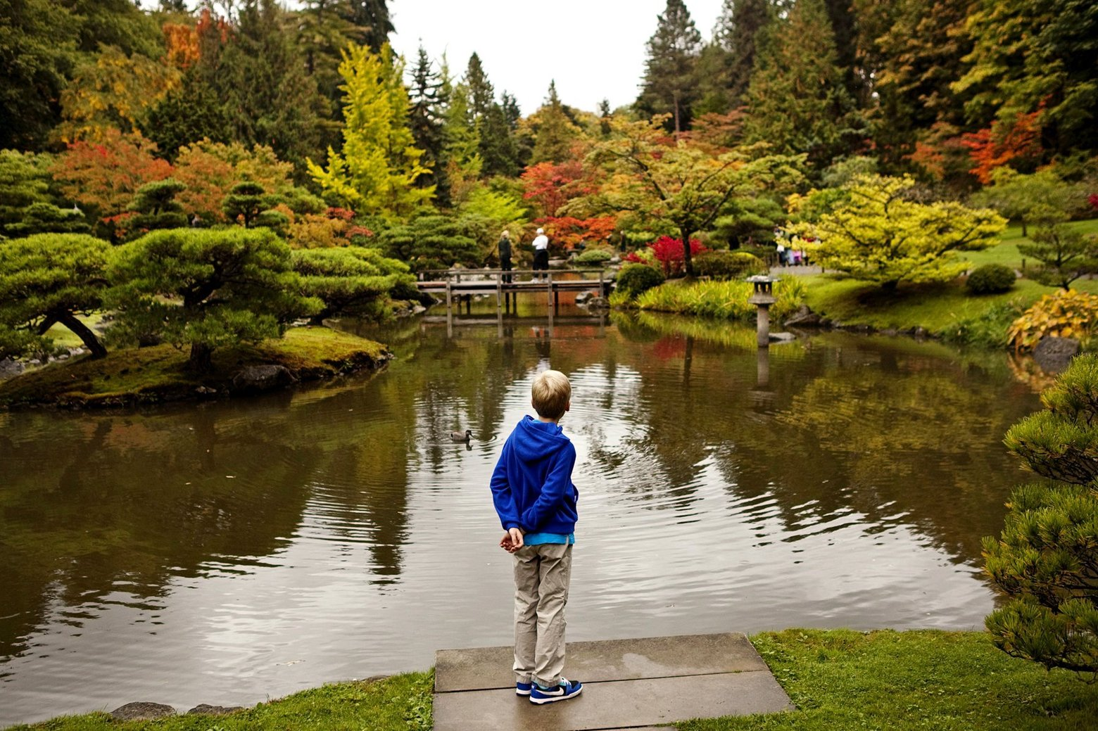 Fall foliage at Seattle Japanese Garden | The Seattle Times
