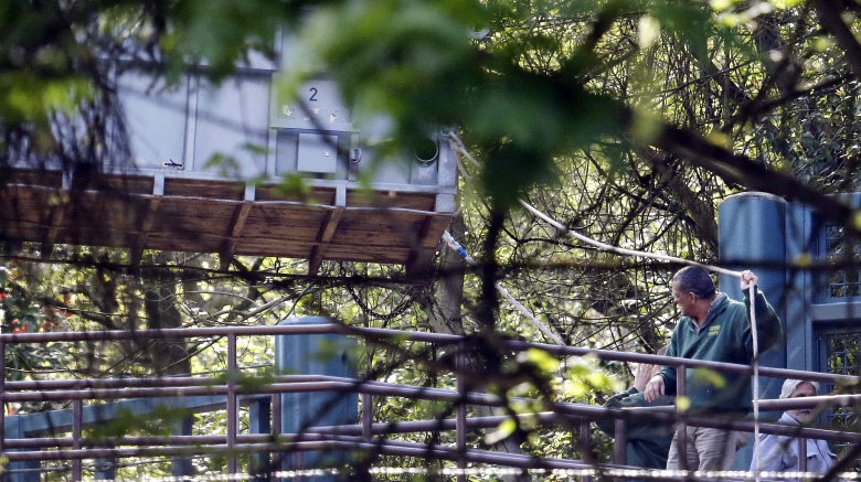 A zoo worker holds a line to help steady a large container, believed to be holding an elephant, as it's moved from the elephant area and onto a truck at the Woodland Park Zoo Wednesday. (Elaine Thompson/AP)