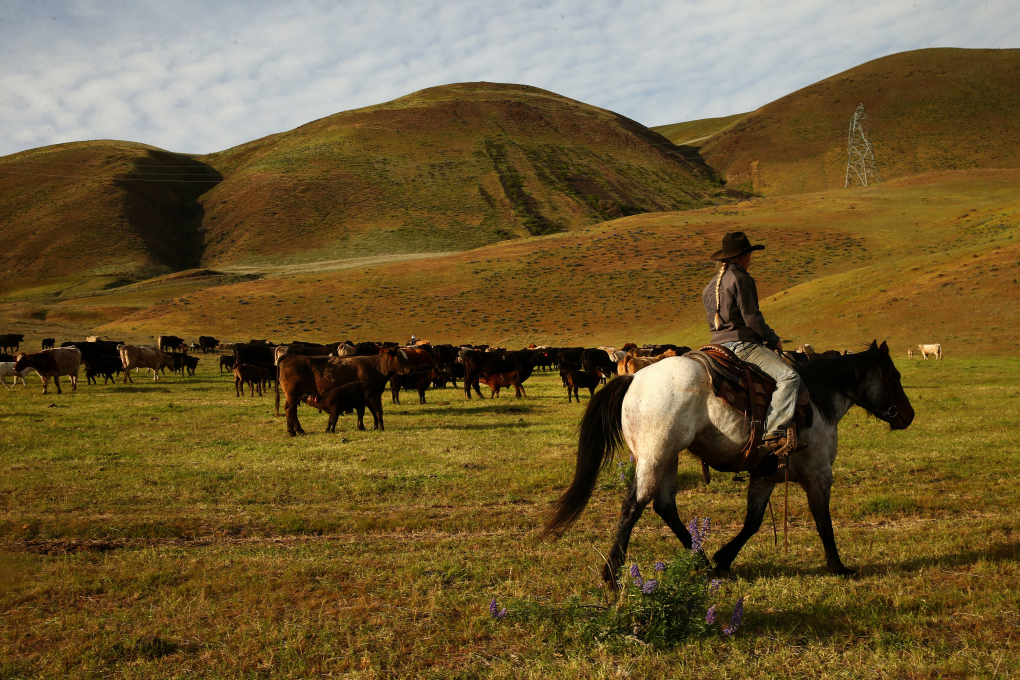 "Shelby Kayser rides through the Columbia Hills before cattle branding. She loves the lifestyle, the panoramic views and the cows and horses. ""I love being able to take care of the animals,"" she said. ""I've learned how to take care of them myself."" (Erika Schultz/The Seattle Times)"