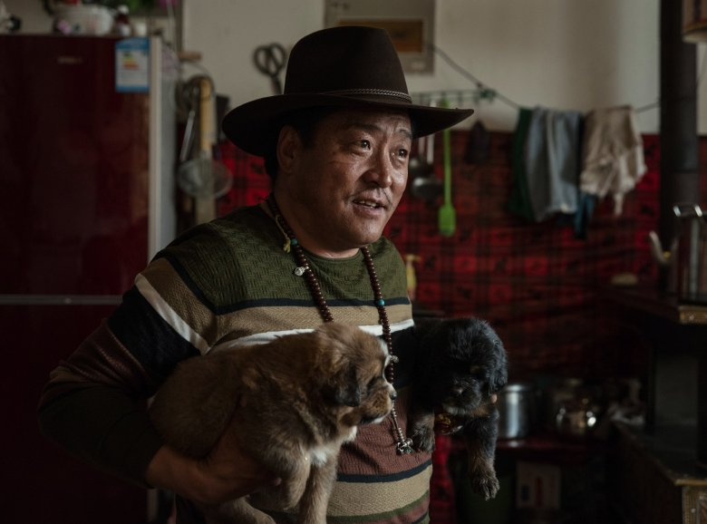 Gombo, a veteran breeder of Tibetan mastiffs, holds two puppies in Yushu, China. Since 2013, about half of the 95 mastiff breeders in Tibet have gone out of business.  (GILLES SABRIE/NYT)