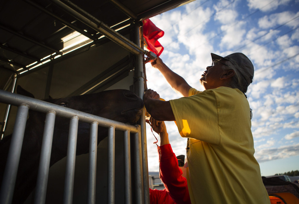 "John Pakootas Sr., right, works with Kory Carden to better display the Confederated Tribes of the Colville Reservation flag as Bold, left, peeks out of his stall during the Battle of the Horse Nations Indian Relay Racing, run by the Professional Indian Horse Racing Association, at Emerald Downs on Friday, June 12, 2015. In an Indian horse relay, competitors in traditional regalia race bareback, exchanging horses every half mile for two miles. During each of the three ""exchanges,"" riders must guide their horse to the team's designated box and board their next horse as quickly as possible. Emerald Downs was recently bought by the Muckleshoot Indian Tribe last November.  (Lindsey Wasson / The Seattle Times)"