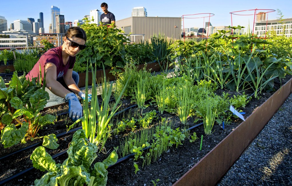 Dahl And Colin McCrate Of Seattle Urban Farm Company Designed, Planted And  Tend 800 Square
