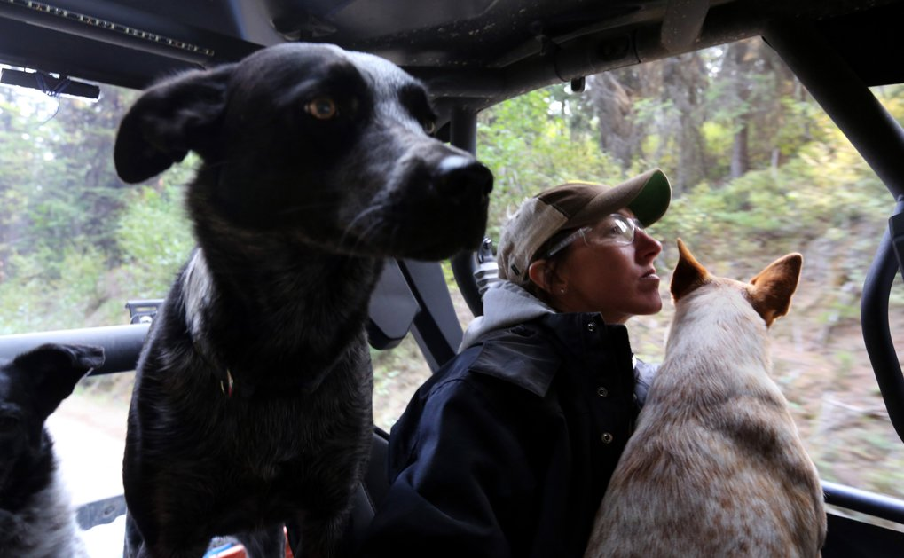 Stacey Woodward scanned the hills for her cattle from a dirt road behind the fire lines and saw none. Her cattle dogs rode along as they sat in an ATV driven by a friend.  (Alan Berner/The Seattle Times)