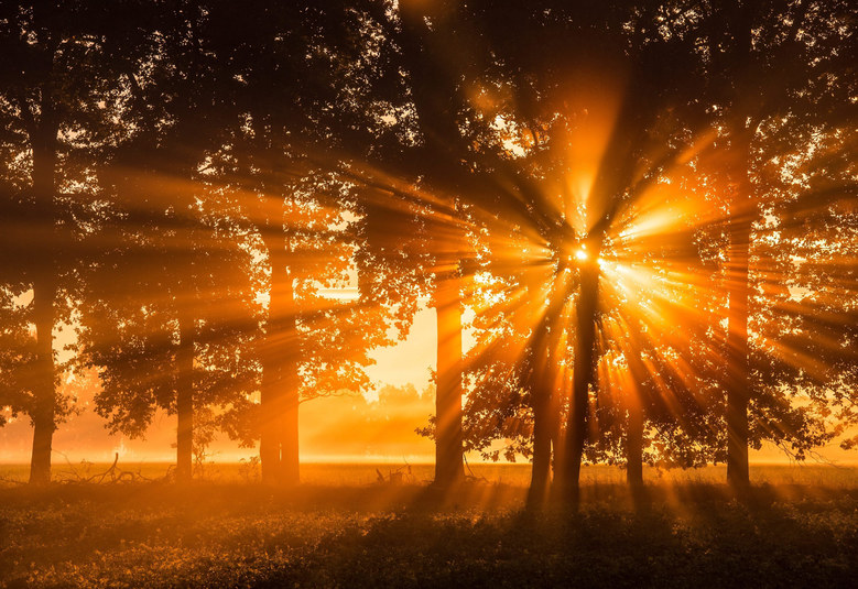 The morning sun shines through a row of trees in a field near Beeskow, Germany, September 29,  2015.  EPA/PATRICK PLEUL