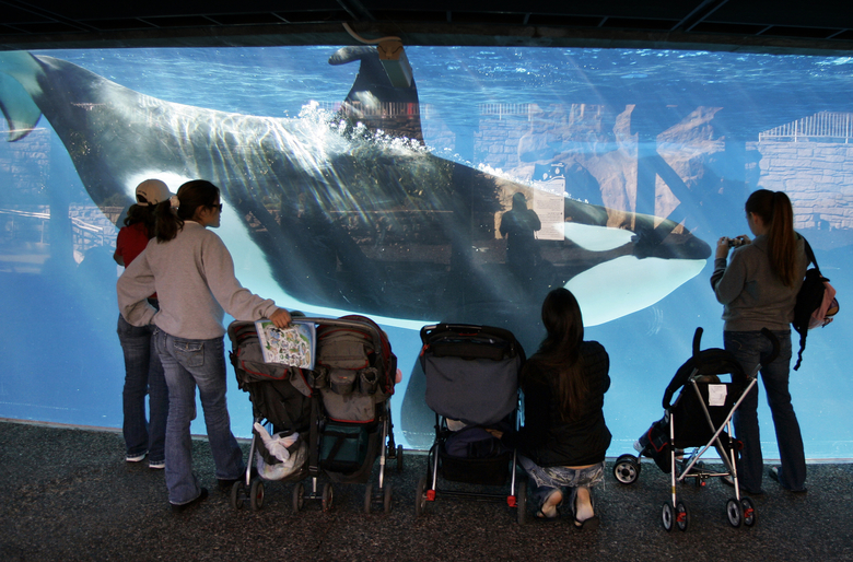 FILE –  In this Nov. 30, 2006, file photo, people watch through the glass as a killer whale passes by while swimming in a display tank at SeaWorld in San Diego.  SeaWorld marine park in San Diego will challenge a state commission ruling than banned the company from breeding its captive killer whales. The announcement on Thursday, Oct. 15, comes a week after the California Coastal Commission endorsed a $100 million expansion of the tanks SeaWorld uses to hold orcas in San Diego. (AP Photo/Chris Park, File)