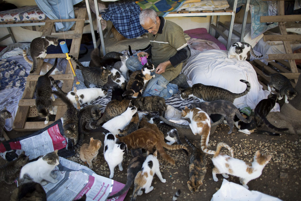 A volunteer feed cats in the shelter house for feral cats at the SPCA (Society for Prevention of Cruelty to Animals) in Jerusalem, Israel, January 6, 2016. The Israeli street cat population is estimated to be about two million. Without enough financial support from the state, animal rights organizations find it difficult to keep the up with the pace when it comes to spaying and neutering feral cats, causing the population to grow.  EPA/ABIR SULTAN