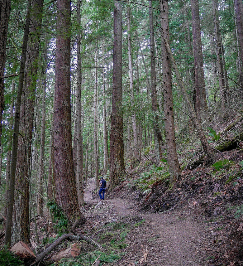 A hiker on the new Margaret's Way trail. (Courtesy of King County Parks)