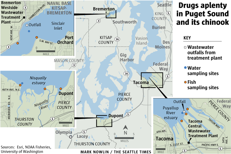 Scientists were surprised to find Prozac and other drugs in Puget Sound waters and fish at some of the highest levels reported in the country.