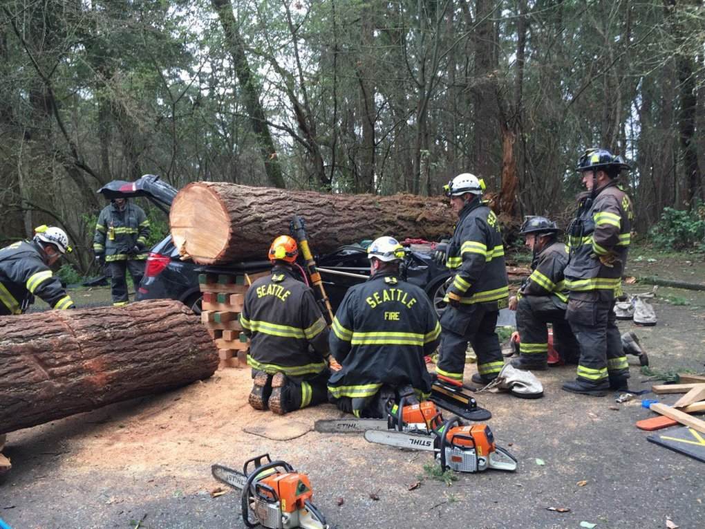 Seattle Fire Department crews work to remove a tree that toppled onto a car in Seattle's Seward Park, killing a man inside. A toddler received minor injuries, and was pulled from the vehicle by a passerby. (Seattle Fire Department)