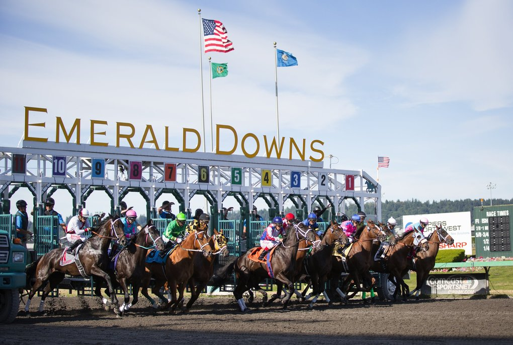 Horses take off from the gate in the one-mile Budweiser Stakes at Emerald Downs. (Lindsey Wasson / The Seattle Times)