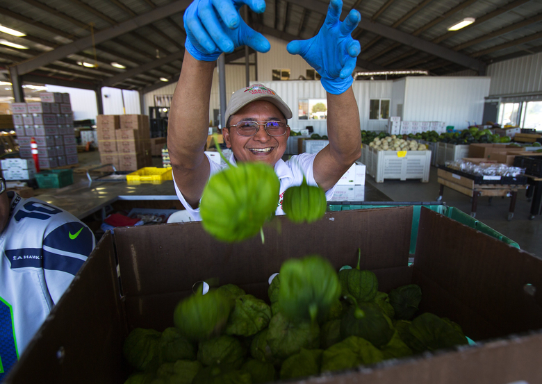 Jun Ballesteros throws tomatillos into a box for a customer at Imperial's Garden in Wapato, Yakima County. The stand is one of a circuit you can visit for the freshest produce from Yakima Valley growers. (Sy Bean/The Seattle Times)