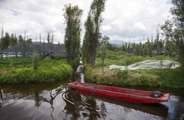 In this Aug. 19, 2016 photo, Edgar Serralde navigates his canoe from the main Xochimilco canal to a secondary passageway, in Mexico City. Serralde lives in Xochimilco, a part of Mexico City known for water, where picturesque canals irrigate the produce grown on man-made islands and serve as transportation routes for those who live and work there as they have since the days of the Aztecs. (AP Photo/Nick Wagner)