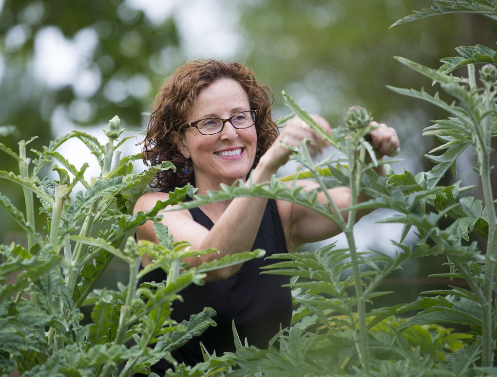 Dietitian Cathy Mathes grows food for taste and beauty. Here she harvests artichokes from her Camano Island garden to marinate for use throughout the year. (Mike Siegel/The Seattle Times)