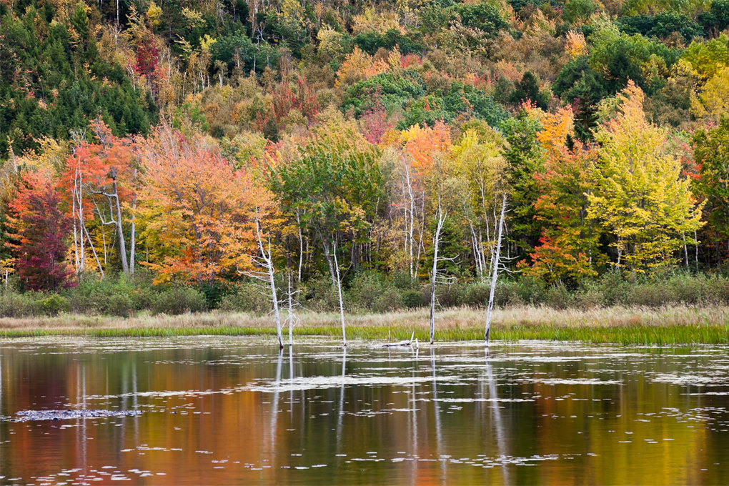 Fall color on Mount Desert Island in Maine.