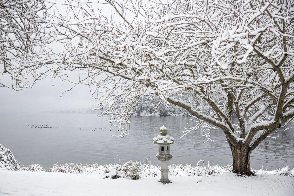 Snow blankets Seward Park in Seattle. (Bettina Hansen / The Seattle Times)