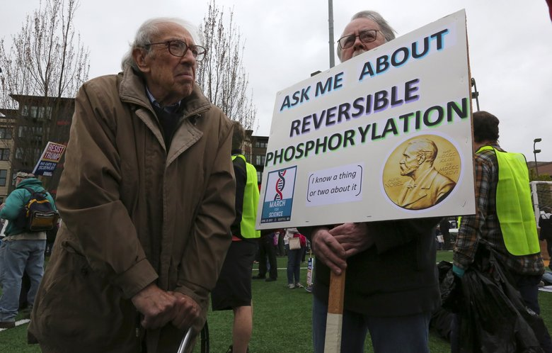 There aren't many people you can ask about reversible phosphorylation, but Nobel laureate Eddy Fischer from the UW is one.  He came to the March for Science rally at Cal Anderson Park on Saturday.  He's 97.  The sign is held by his son-in-law Loren Tubbs.  (Alan Berner / The Seattle Times)