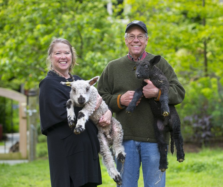 Nan and Ken Leaman hold young Teeswater sheep recently born on their farm on Whidbey Island. (Mike Siegel/The Seattle Times)