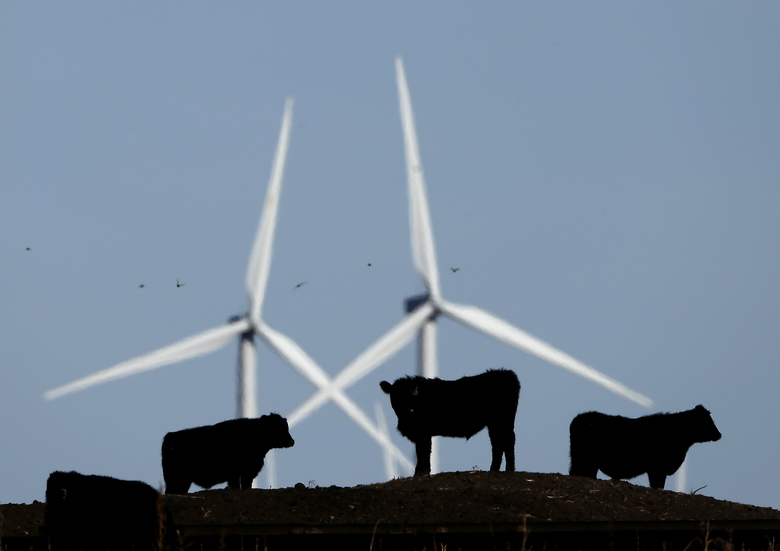 FILE – In this Dec. 9, 2015 file photo, cattle graze in a pasture against a backdrop of wind turbines which are part of the 155 turbine Smoky Hill Wind Farm near Vesper, Kan. Even if President Donald Trump withdraws U.S. support for the Paris climate change accord, domestic efforts to battle global warming will continue. Dozens of states and many cities have policies intended to reduce emissions of greenhouses gases and deal with the effects of rising temperatures. Even in red states, many consider flood prevention and renewable energy are considered smart business. (AP Photo/Charlie Riedel, File)