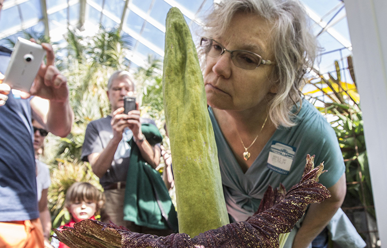 CORPSE FLOWER – SEATTLE – 091214