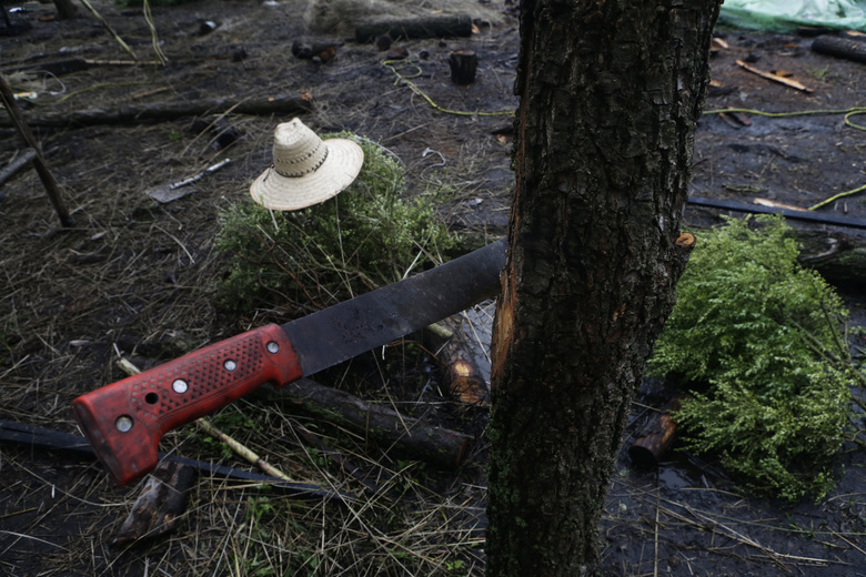 """In this July 13, 2017 photo, a farmer's machete and hat sit on a floating farm known as a """"chinampa"""" in Xochimilco, Mexico City. The World Heritage status and Xochimilco itself are threatened by the pollution and encroaching urbanization that plague the rest of the sprawling metropolis. (AP Photo / Marco Ugarte)"""