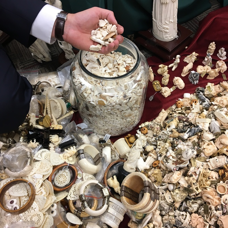 This photo taken July 27, 2017, in Albany, N.Y., shows carved ivory tusks, some of the artifacts to be crushed Thursday, Aug. 3 in Central Park to highlight New York's determination to crush the illegal ivory trade. Since August 2014, New York law has prohibited the sale, purchase, trade or distribution of anything made from elephant or mammoth ivory or rhinoceros horn, except in limited situations with state approval. Enforcement efforts have focused on New York City, the nation's largest port of entry for illegal wildlife goods, state officials said.  (AP Photo/ Mary Esch)