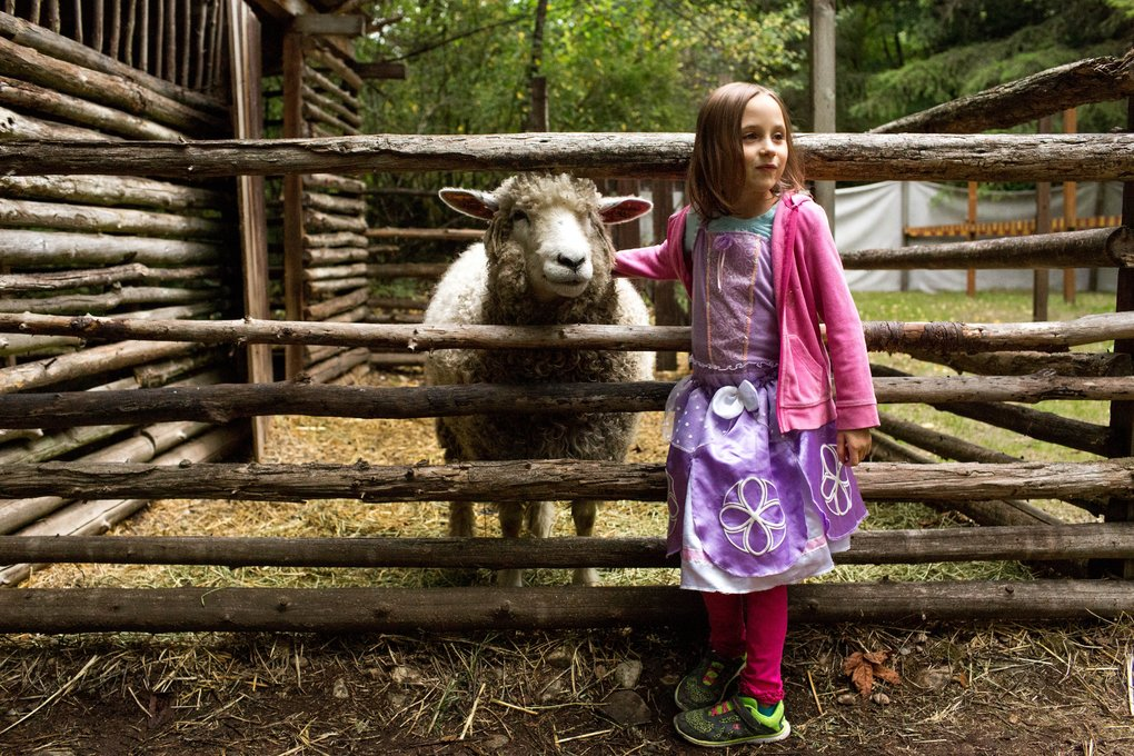 Kaitlyn Armstrong makes a woolly friend during the Michelmasse Festival. In addition to sheep petting, the festival includes demonstrations of cider pressing and archery, music and puppetry.  (Courtney Pedroza/The Seattle Times)