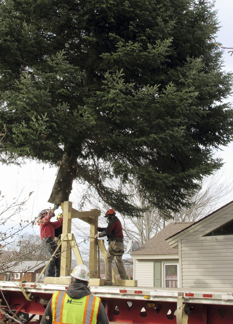90s Christmas Tree.State Christmas Tree Honors Boy Who Planted It Died In 90s