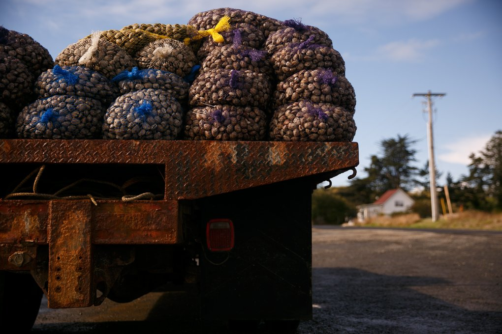 Trucks transport clams in Pacific County. The economy in this part of Southwest Washington depends on seafood, cranberries and tourism. (Erika Schultz / The Seattle Times)