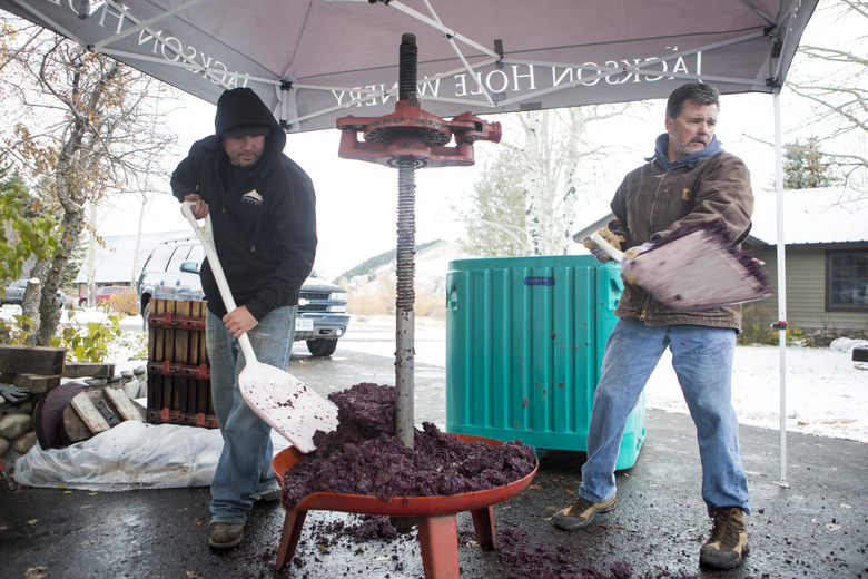 Winemaker Anthony Schroth and John Thomas shovel grapes into a bin after pressing the juices Saturday, Oct. 21, 2017, at Jackson Hole Winery in Jackson, Wyo. (Ashley Cooper/Jackson Hole News & Guide via AP)