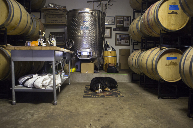 Nollie relaxes Thursday, Nov. 16, 2017, at Jackson Hole Winery in Jackson, Wyo. where wines are produced and cellared at 6,229 feet above sea level on Spring Creek at the base of the Tetons. (Ashley Cooper/Jackson Hole News & Guide via AP)
