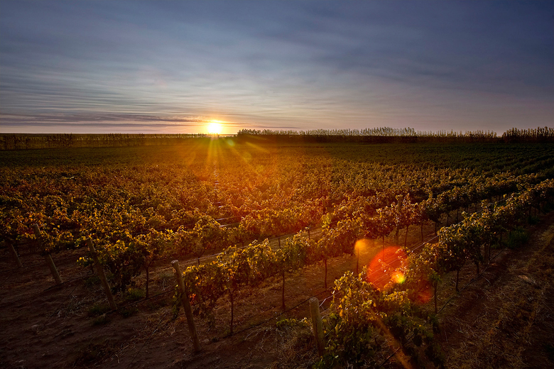 Argentina's sun-drenched vineyards are bursting with the world's most interesting malbecs. (Courtesy Familia Schroeder)