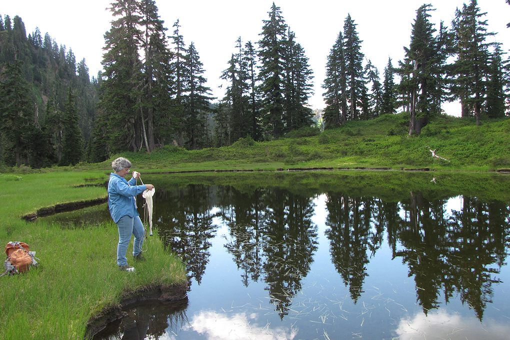 Robin Matthews, director of WWU's Institute for Watershed Studies, takes a water sample at Anderson Lakes in Whatcom County. (Photo by Geoff Matthews)