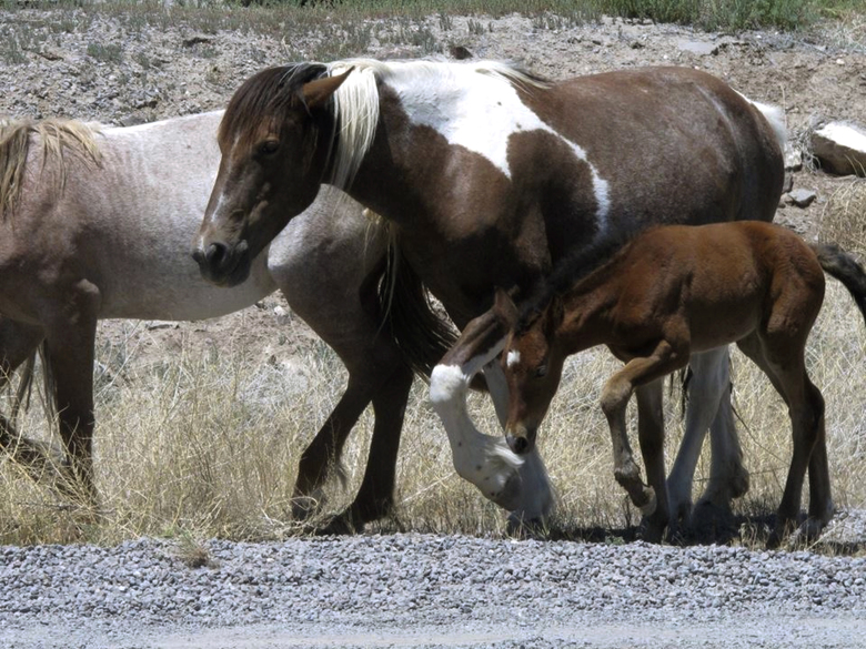 Nevada woman sues, fears missing horse could be slaughtered