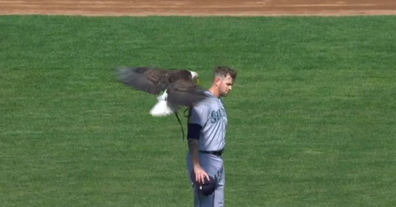 Bald eagle goes after Mariners pitcher at Twins home opener