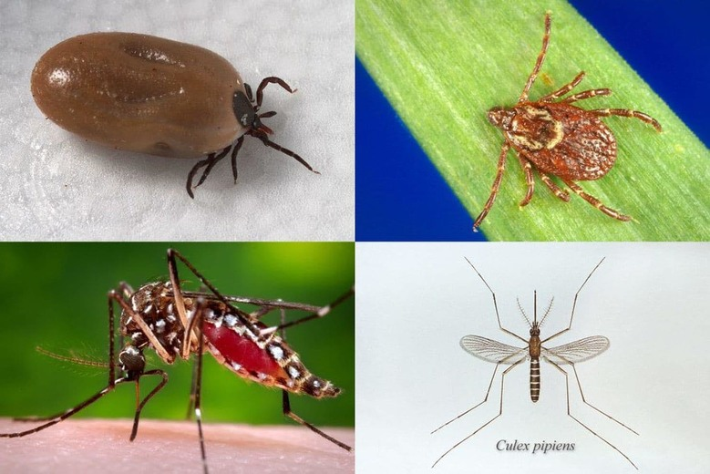 Illnesses from mosquito, tick and flea bites on the rise — CDC