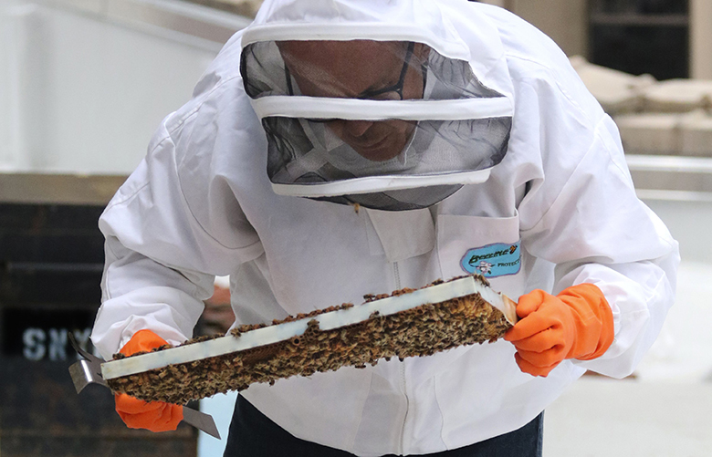 Beekeeper and executive chef Gavin Stephenson at The Sanctuary checks a frame from one of four hives on the roof looking for the queen.   He will use honey produced in the hives in recipes at the event space.