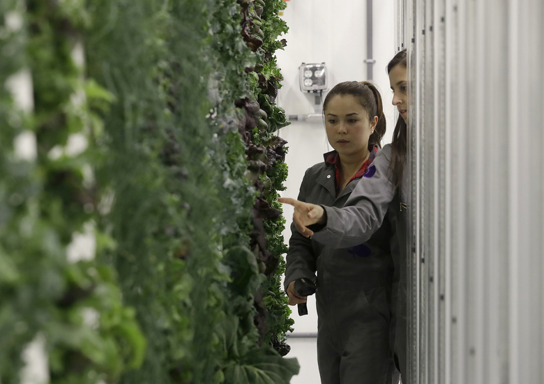 Production manager Emy Kelty, left, and senior grower Molly Kreykes scan and monitor plants growing on towers in the grow room at the Plenty office in San Francisco. More than 30 high-tech companies from the U.S. to Singapore hope to turn indoor farming into a major future food source, if only they can clear a stubborn hurdle: high costs.  (Jeff Chiu/AP)