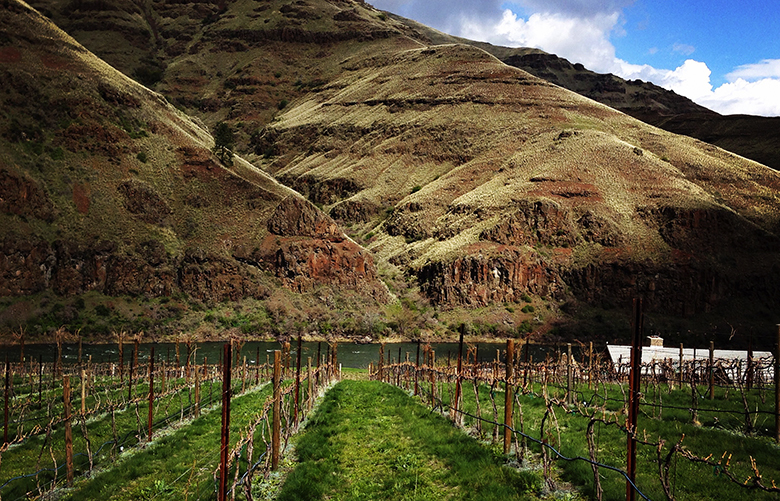 Rockin J Vineyard is in a canyon overlooking the Grand Ronde River in Asotin County. (Andy Perdue photo)